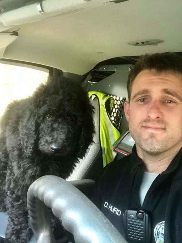 Danny doing his job with a black poodle